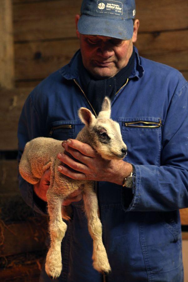 Trotse boer Willem met pasgeboren lammetje