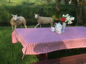 Picknick boomgaard boerderij Hoefwoning